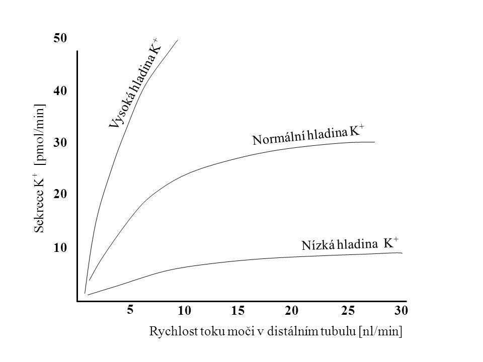 50 Vysoká hladina K+ 40. Sekrece K+ [pmol/min] Normální hladina K+ 30. 20. 10. Nízká hladina K+